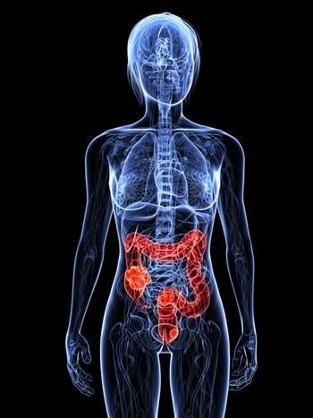 intestines-colon