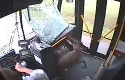 งานนี้มีงง กวางทะลุกระจกรถเมล์