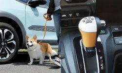 Honda ปล่อยชุดแต่งสุดน่ารักเอาใจคนรักน้องหมาโดยเฉพาะที่ญี่ปุ่น