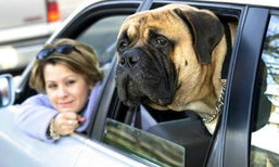 9 ทิปขับรถเที่ยวกับสัตว์เลี้ยง ...ทำอย่างไรไม่วุ่นวาย