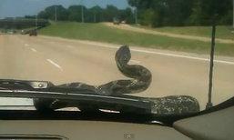 OMG!!!!....เมื่องูขอติดรถไปด้วย