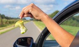 6 วิธีปกป้องรถจากกองทัพแมลงสาบ ปิดความเสี่ยงอุบัติเหตุบนท้องถนน