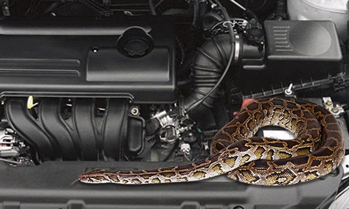 """วิธีป้องกันรถไม่ให้มี """"งู"""" ออกมา"""