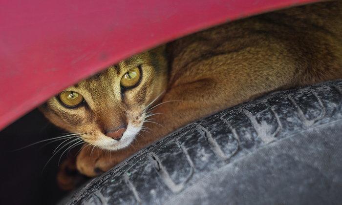 ทาสแมวฟังให้ดี! เผย 5 จุดในรถที่น้องเหมียวชอบไปนอน มีตรงไหนบ้าง?