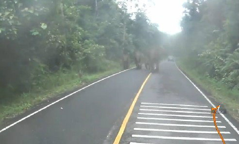 ระวัง! ขี่บิ๊กไบค์หนีตายช้างป่าที่เขาใหญ่