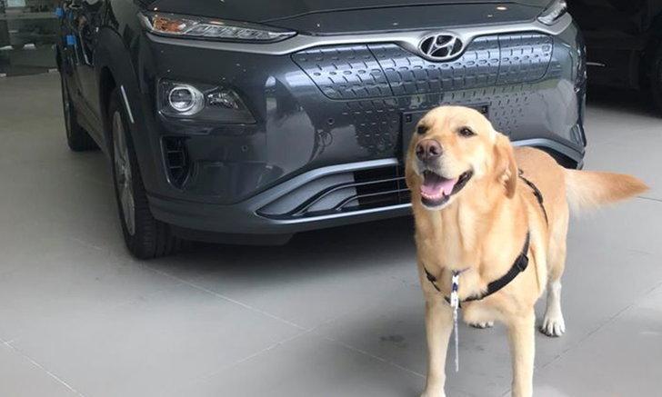 """ส่องความน่ารัก """"น้องโอนลี่"""" พนักงานพาร์ทไทม์แสนรู้แห่งค่าย Hyundai"""