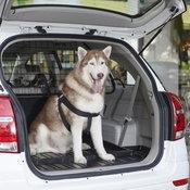เทคนิคขับรถกับน้องหมา-แมว