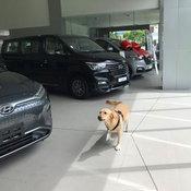 """ส่องความน่ารัก """"น้องโอนลี่"""" พนักงานพาร์ทไทม์แสนน่ารักของ Hyundai"""