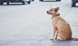 เจอสุนัขวิ่งตัดหน้า ควรหักหลบ หรือชนไปเลยดีกว่า?