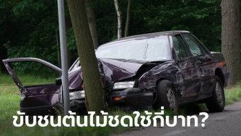ขับรถชนต้นไม้ 1 ต้น ต้องชดใช้เป็นเงินกี่บาท?