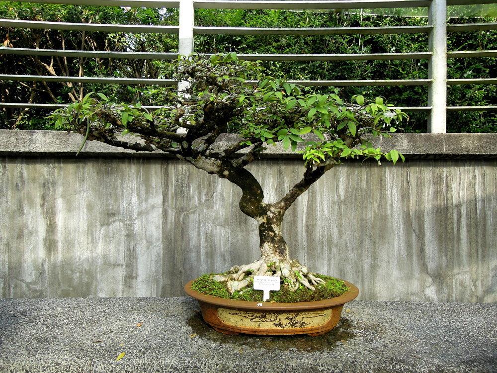 Botanic_garden14
