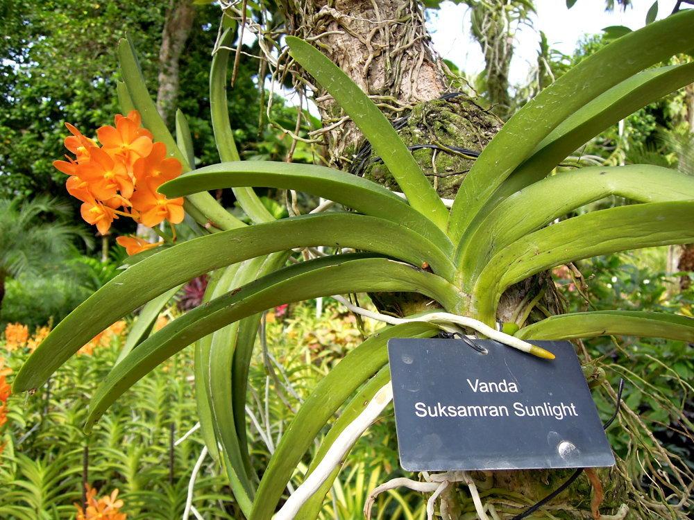 Botanic_garden18