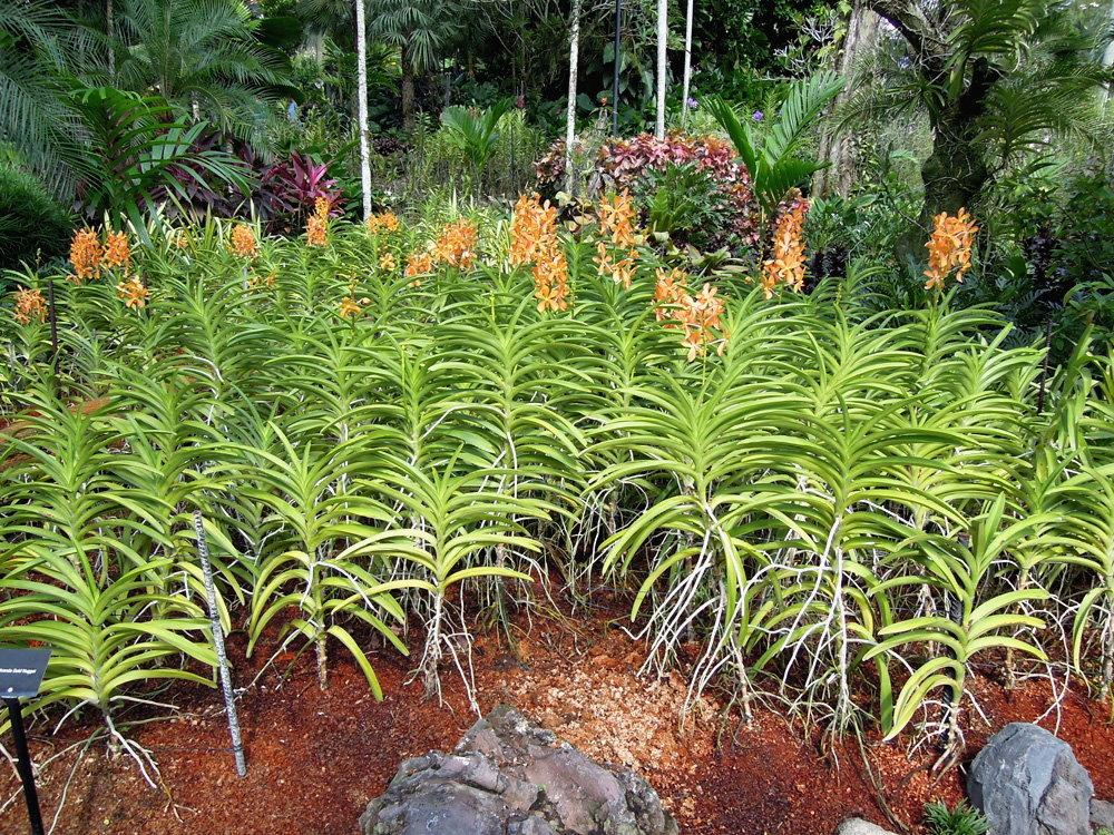 Botanic_garden19
