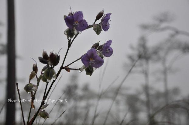 PhooSoiDao_PhuSoiDown_ (84)-340