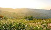เส้นทางแห่งรักขับทะลุเมฆไปกอดดอยสีชมพูที่ภูทับเบิก ภูหินร่องกล้า ภูลมโล เขาค้อ ตอนที่ 1