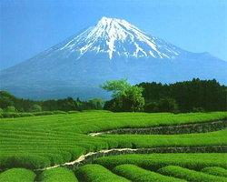 โครงการนิสิตแลกเปลี่ยน ประเทศญี่ปุ่น ประจำปี 2553