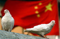 นกพิราบส่งสาร อาวุธลับสุดยอดของจีน