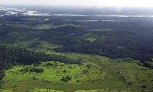 กูเกิลเปิดตัวเครื่องมือช่วยเฝ้าดูแลป่าไม้ของโลก