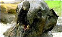 มีสำนวนเก๋ๆ เกี่ยวกับ ช. ช้าง มาฝาก