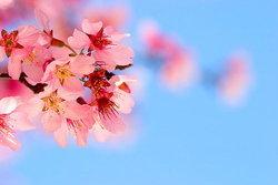 10 อันดับ ดอกไม้ที่สวยที่สุด
