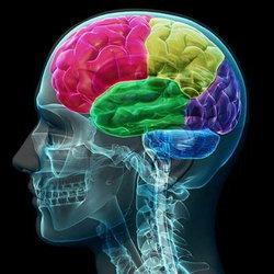 """""""ดร.เทอรี่ กรอสแมน"""" แนะวิธีบริหารสมองไม่เสื่อม"""