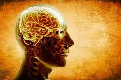 """พูดได้มากกว่า """"1 ภาษา"""" ช่วยเพิ่มความคมให้สมอง"""