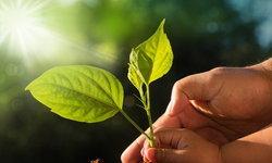ธุรกิจฟื้นฟูป่าและดินเสื่อมคุณภาพ ทำกำไรในระยะยาว