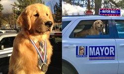 ประชาชนแฮปปี้เพราะ มีหมาเป็นนายก หมาโกลเด้นเป็นนายกเทศมนตรี ประจำเมือง