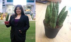 ม.หอการค้าไทยหนุนนักศึกษาขายออนไลน์จีน ยอดสั่งซื้อต้นไม้สองแสนกว่าต้นต่อเดือน