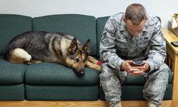 สุนัขคือเพื่อนที่ดีที่สุดของมนุษย์ งานวิจัยเผย สุนัขสามารถรับรู้ถึงความเครียดของเจ้าของได้