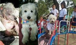 """""""หมาเน่าโมโจ"""" จากหมาถูกทิ้ง กลายเป็นขวัญใจเด็กนักเรียนทั้งโรงเรียน"""