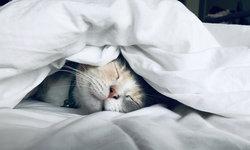 """คำว่า """"ฝันดีนะ"""" มีความหมายที่ลึกซึ้งกว่านั้น"""