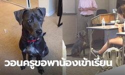 นักเรียนยอมแหกกฎ ขอพาน้องหมาเข้าห้องเรียนด้วย เพราะกลัวหนีพายุไม่ทัน