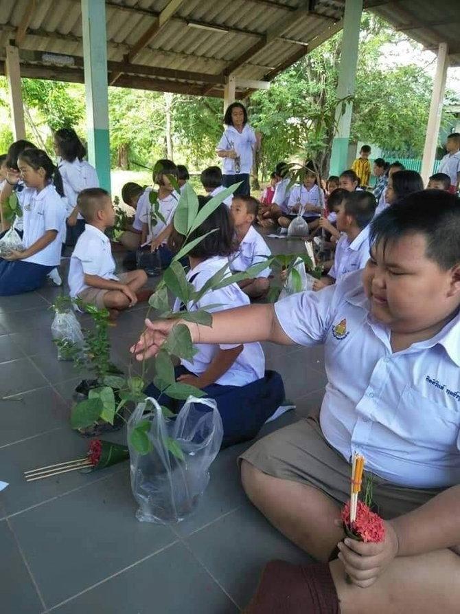 ไหว้ครูด้วยต้นไม้