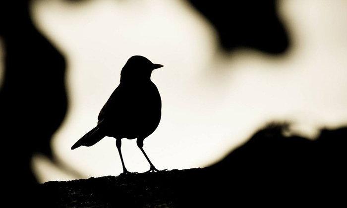 """รักข้างเดียวเป็นเรื่องซึ้งเสมอ เมื่อความ """"นก"""" เป็นของคนอื่น"""