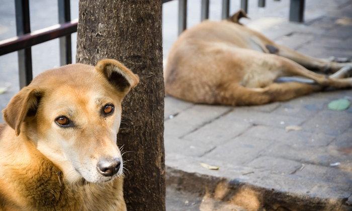 ถ้าเจอ หมาวิ่งไล่กัด ควรทำอย่างไร ถึงจะรอดพ้นคมเขี้ยวของมันได้