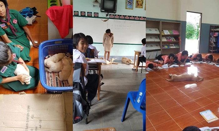 """""""ห้องเรียนสี่ขา"""" คุณครูกับเหล่านักเรียนและเพื่อนร่วมห้อง 4 ขาที่เข้ามาเรียนด้วยทุกวัน"""