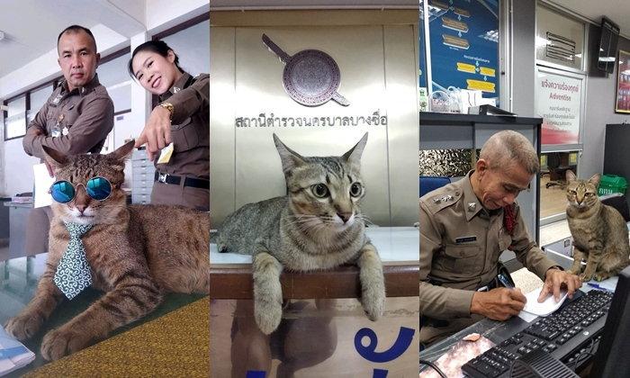 """""""แมวโรงพัก"""" รวมน้องเหมียวสุดน่ารักไอดอลสี่ขาทั่วโรงพักประเทศไทย"""