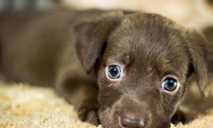 นักวิจัยค้าน การคำนวณอายุสุนัขไม่ใช่การคูณจำนวนปีด้วยเลข 7