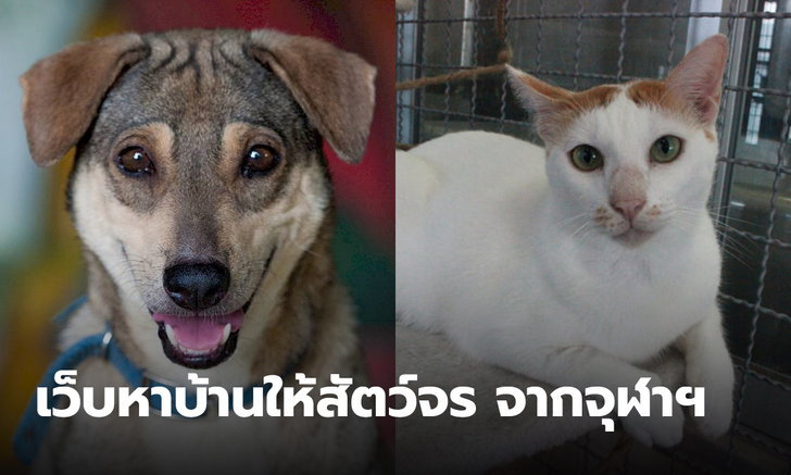 นิสิตสัตวแพทยศาสตร์ จุฬาฯ สร้างโปรเจค เว็บไซต์ช่วยหาบ้านให้หมาแมวจรจัด ลดปัญหาสังคม