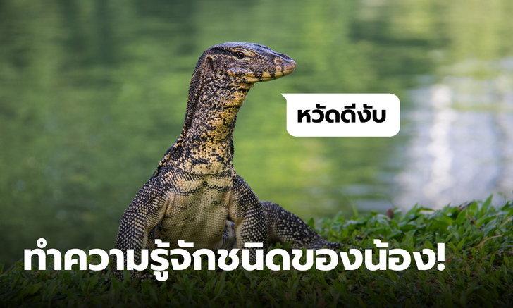 เป็นเหี้ยอะไร? รวมชนิดของน้องเหี้ยที่พบในไทย ควรรู้ไว้จำแนกประเภท