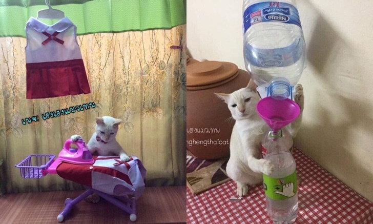 ใครบอกว่าแมวไม่มีประโยชน์! น้องทำได้ทุกอย่างตั้งแต่รีดผ้า ยันกรอกน้ำใส่ขวด