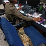 แมวโรงพัก