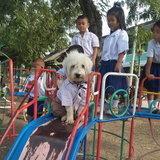 หมาเน่าโมโจ