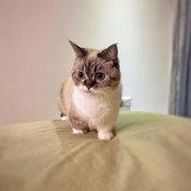 pet_disneyfication