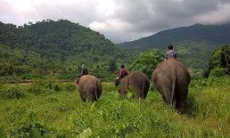 ร่วมใจปลูกป่า พาช้างกลับบ้าน