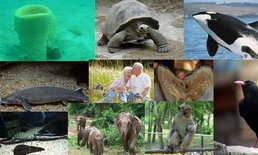10 อันดับสัตว์ที่อายุยืนที่สุด