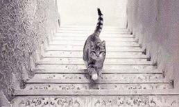 ดูภาพแมว ก็บ่งบอกได้ถึงความคิดของคุณ