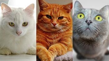 """""""สัมผัสพิเศษของแมว"""" ที่คุณอาจไม่เคยรู้ ทาสแมวต้องรู้ไว้ บอกเลย!"""