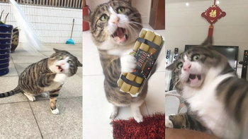 """""""อาเฟย"""" แมวหน้าเหวอ เน็ตไอดอลจากประเทศจีน ไม่ว่ารูปไหนนางก็หน้าเหวอตลอด"""